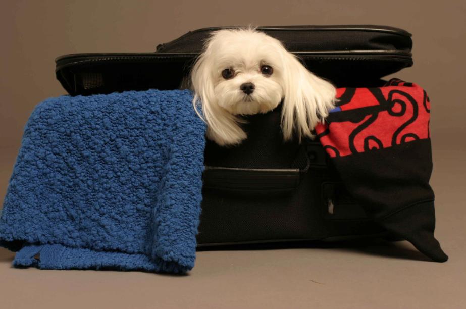 Köpeğiniz İçin Uçak Seyahati
